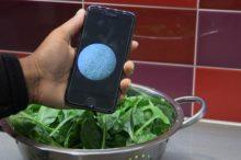 smartphone bacteria